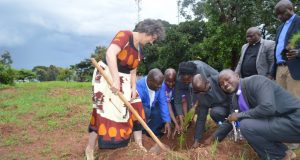 UCZ Launches Tree planting, 80 trees planted in Mbereshi
